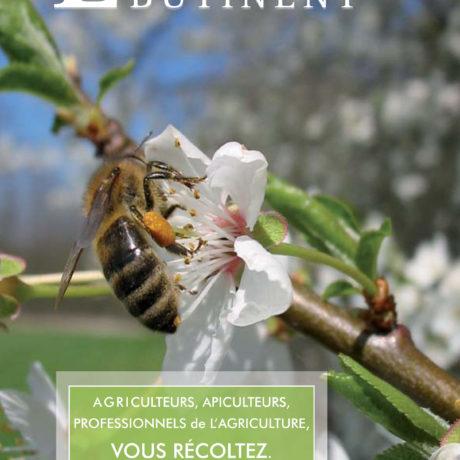 Nos abeilles en danger ...