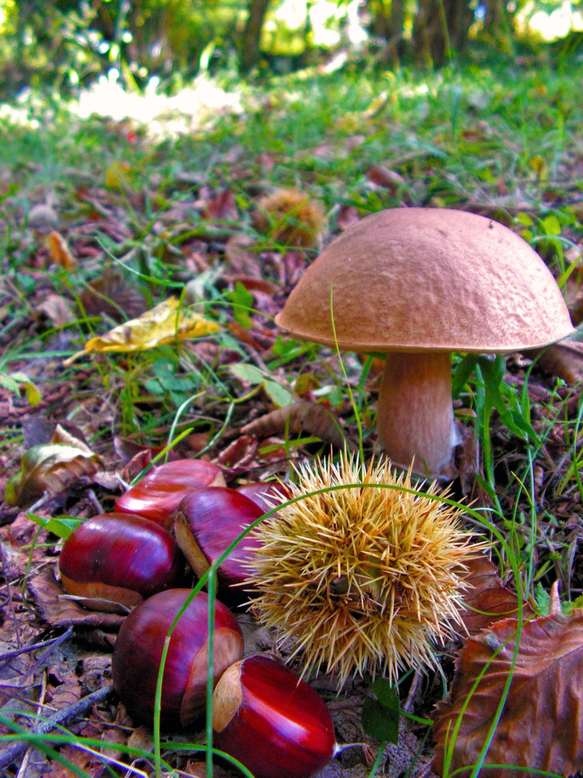 Sortie champignons annulée